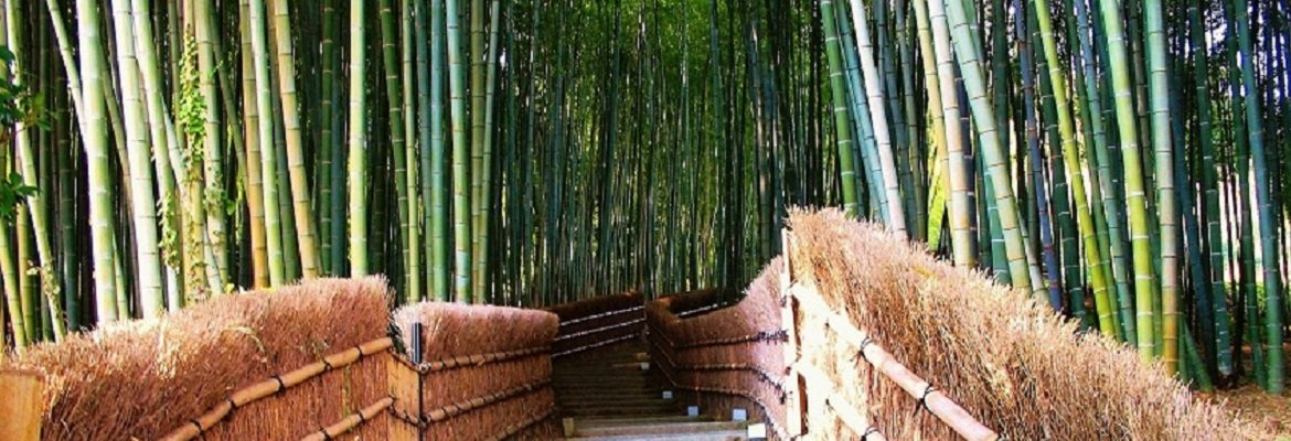 Walkway through bamboo