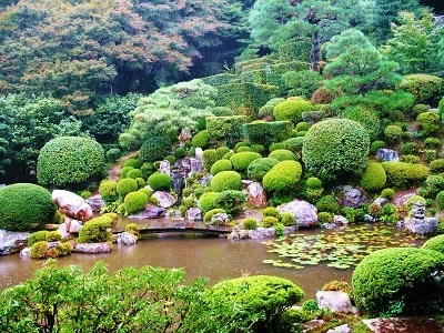Green bush, pond, and garden
